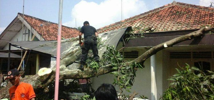 Evakuasi Pohon Tumbang di Kecamatan Cibinong